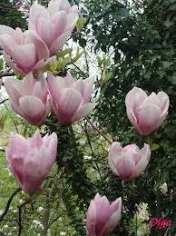 magnolia george henry kern george henry kern. Black Bedroom Furniture Sets. Home Design Ideas