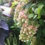 hydrangea-quercifolia-snowflake-jeffrey-erb-landscape-design