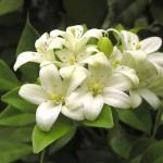 1208359056_flower01