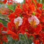 117469615_kartinki24_flowers_0195