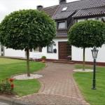 Acer platanoides Globosum 000