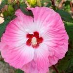 hibiscus-tie-dye.i-2793.s-62731.r-01