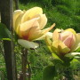 Sunsation_08-05