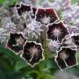 478506819544e5c97b20d86d6ab969bd--rare-flowers-unusual-flowers