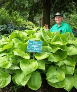 funkia-sum-and-substance-hosta