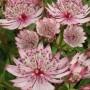 8b4ea5d808562c59ee16052668c11bfe--unique-plants-rare-plants