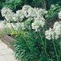 fc1d519d3c25c3b61071a9ca0f0ce9a8--flowering-plants-garden-plants