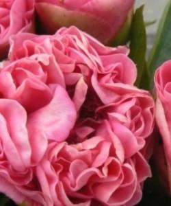 data-poini-3arubezhnoi-celekcii-carnation-bouquet-573-2-500x500
