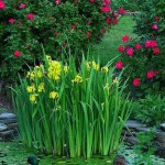 ирис болотныйe6b18085c5736d6aeeaa8d0eccbaf208--garden-water-features-garden-ponds