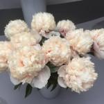 paeonia-colonel-owen-cousins-de-e_-vriend-en-plena-floración