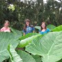 Colocasia gigantea 'Thailand Giant' with girls