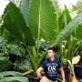 af932d9430ede82722a0c924e43c578f--indoor-plants-garden-plants