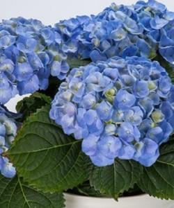70089912_hi_river_blue_3_0